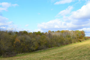 14 Acres of Woods & Meadow with Camper in Southwest Wisconsin!