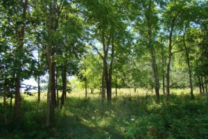 Southern Wisconsin Lakefront Property, 100' Shore, Camp or Build only $79,900!