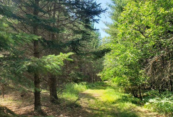 Northern Wisconsin, 3 Acres, Oneida County!