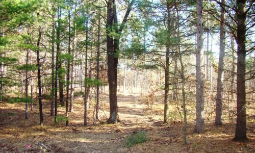 Central WI 3 Acres for Sale & Castle Rock Lake!