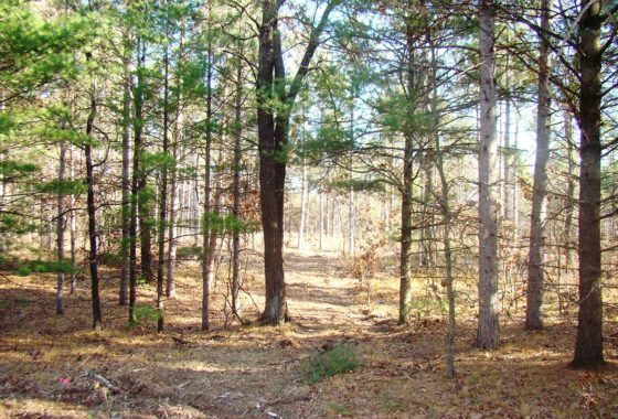 Central WI 8 Acres for Sale & Castle Rock Lake!