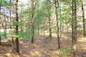 Central WI 8 Acres for Sale & Castle Rock Lake!