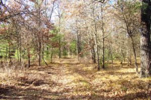 Wisconsin Acreage for Sale, Wooded Acreage by Castle Rock Lake!