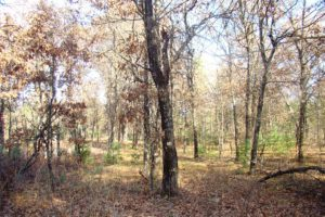 Castle Rock Lake Area, 7.5 Acres of Wooded Wisconsin Property!