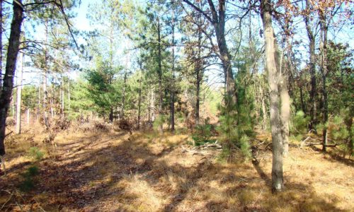 Central Wisconsin 2 Acre Wooded Property near the Lakes!