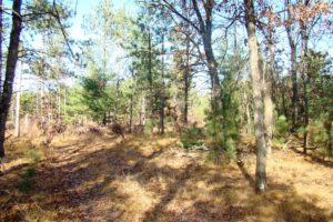 Central WI 3 Acres of Wooded Property!