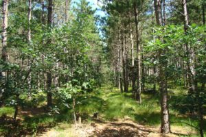 Central Wisconsin 10 Acre Wooded Property near the Lakes!