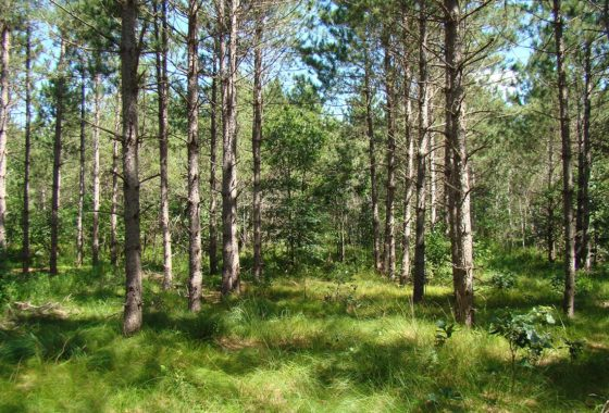 Wisconsin Acreage for Sale, 10 Wooded Acres by Castle Rock Lake!