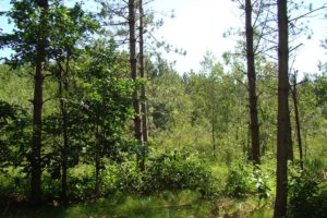 Central WI 5 Acres of Wooded Property!
