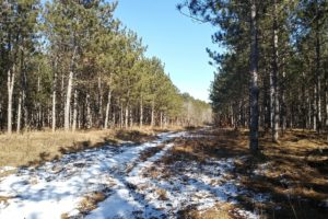 Central Wisconsin Juneau County 5 Acres for Sale!