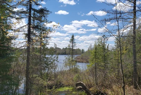 Wisconsin's Northwoods, 193 Acres and 900' Shoreline on the Eagle River!