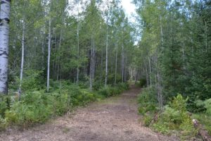 Northern Wisconsin, 9 Acres, Camp or Build, Bordering National Forest!