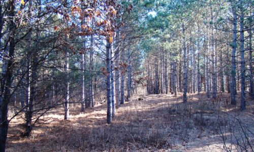 Central WI 7 Acres of Wooded Property, Adams County!