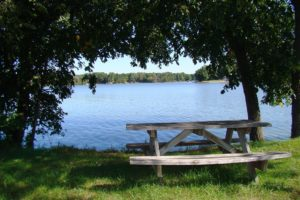 3 Acre Central WI Land for Sale, Camp or Build!
