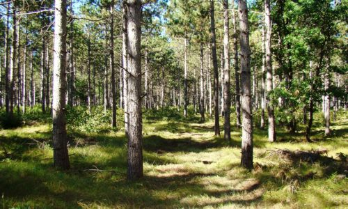 Central WI 5 Acres for Sale by 23,000 Acre All Sports Lake!