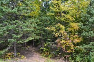 Wooded Camp or Cabin Site by Moccasin Lake in Northern Wisconsin!