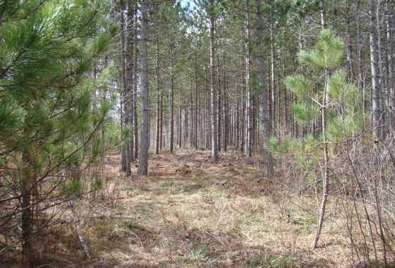 Wooded Wisconsin Hunting Land in Oneida County $46,900!