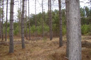 Wooded Wisconsin Hunting Land in Oneida County $33,900!