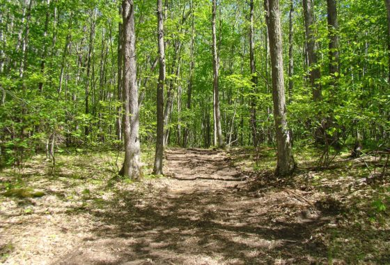 Northern Wisconsin, 15 Acres, Marinette County Forest!