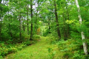 Northern Wisconsin 9 Acre Woods in the Heart of Recreation!