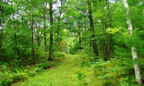 Northern Wisconsin 5 Acre Woods in the Heart of Recreation!