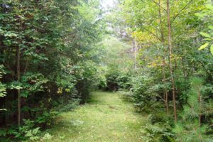 Northern Wisconsin, 3 Acres, Mature Woods, Oneida Lake!
