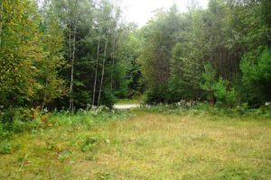 Wooded Camp or Cabin Site; Walk to the Lake in Northern Wisconsin!