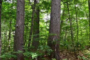 Northern WI 4 Acre Cabin Property and the Flambeau Chain of Lakes!