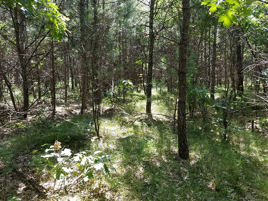 Central Wisconsin Lake Petenwell Area Property!