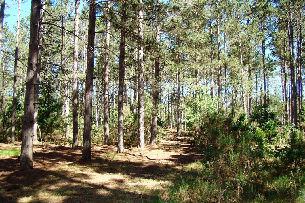Northwest Wisconsin, 4.2 Acres, Mature Woods in Burnett County!