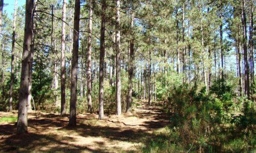 Northwest Wisconsin, 4.2 Acres, Mature Woods in Burnett County!