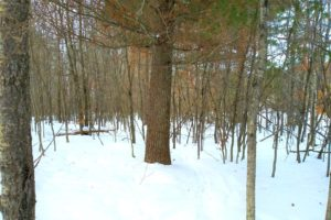 12.5 Acres with Pond in NW WI! Save $5K!