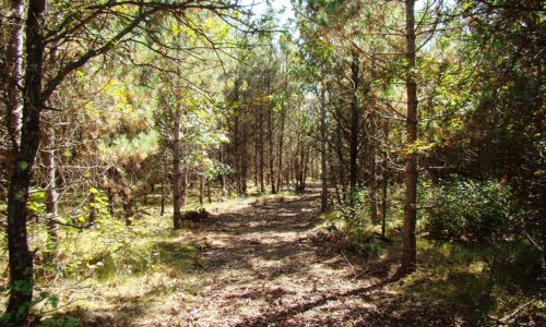 Northern Wisconsin 10 Acres, Woods & Yellow Lake!