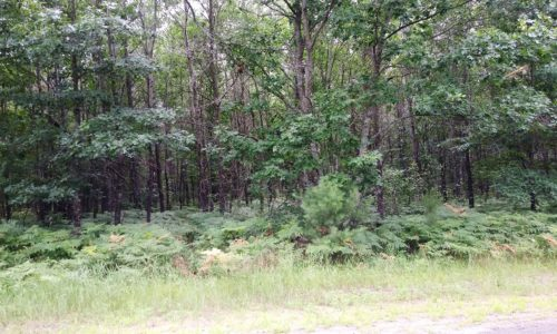 Northwest Wisconsin 5 Acres, Woods & Yellow Lake $33,900!