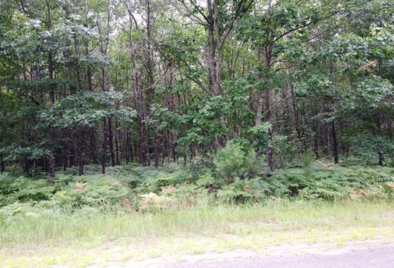 Northwest Wisconsin 5 Acres, Woods & Yellow Lake $33,900!