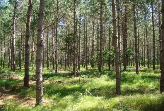 Northern WI 10 Wooded Acres Near 2,280 Acre All Sports Lake!