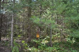 Northern Wisconsin, 10 Acres, Adjoins Nicolet National Forest!