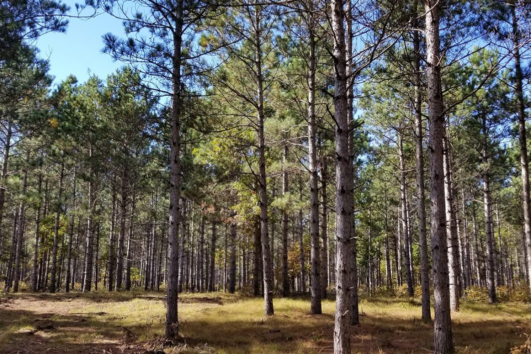 4 Acres, Woods, by Central Wisconsin's Lake Camelot!
