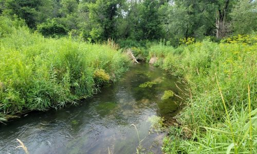 6.5 Acres and 600 Feet of Shoreline on a SW Wisconsin Trout Stream, Sugar Creek!