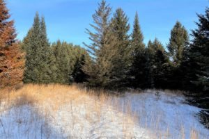 Northern Wisconsin, Marinette County Land for Sale $19,900!