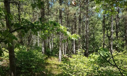 Wisconsin Acreage for Sale, Wooded Acreage by Lake Petenwell!