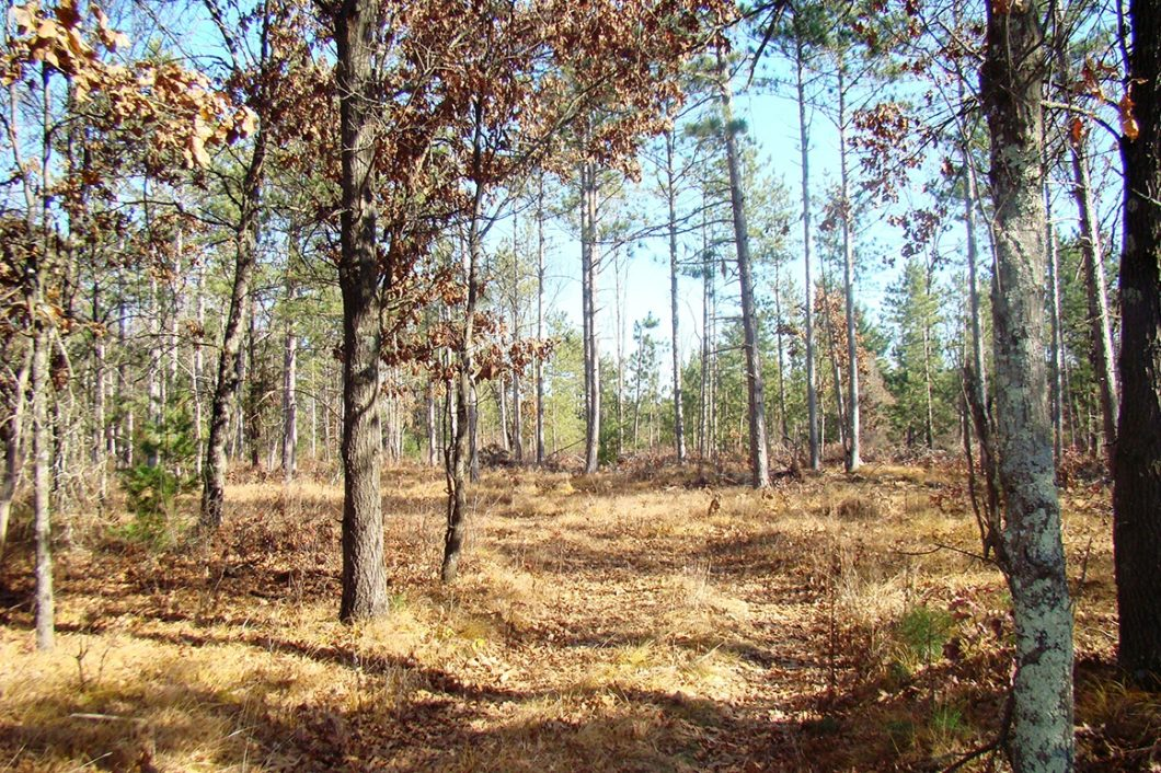 Central Wisconsin Juneau County Acreage for Sale!