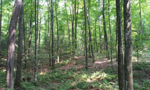 Northeast Wisconsin, Forest County Acreage & Lake Lucerne!