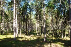 Adams County, WI – 7.56 Acres of Wooded Property and Lake Petenwell!