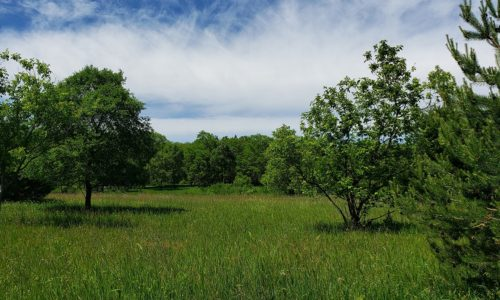 Central Wisconsin Waushara County Acreage for Sale!