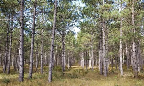 Central Wisconsin 3.5 Acre Wooded Property near the Lakes!