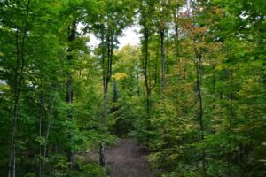 Wisconsin Northwoods Hunting Land, 10 Acres Borders Langlade County Forest!