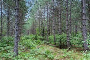 Northern Wisconsin, 5 Acres of Wooded Seclusion in the Heart of Recreation!