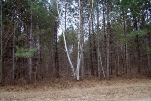 Northern Wisconsin, 10 Acres of Woods in the Heart of Recreation!