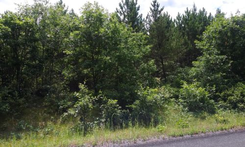 Northern WI Land; 11 Acres, Woods and Wildlife near the St. Croix River!